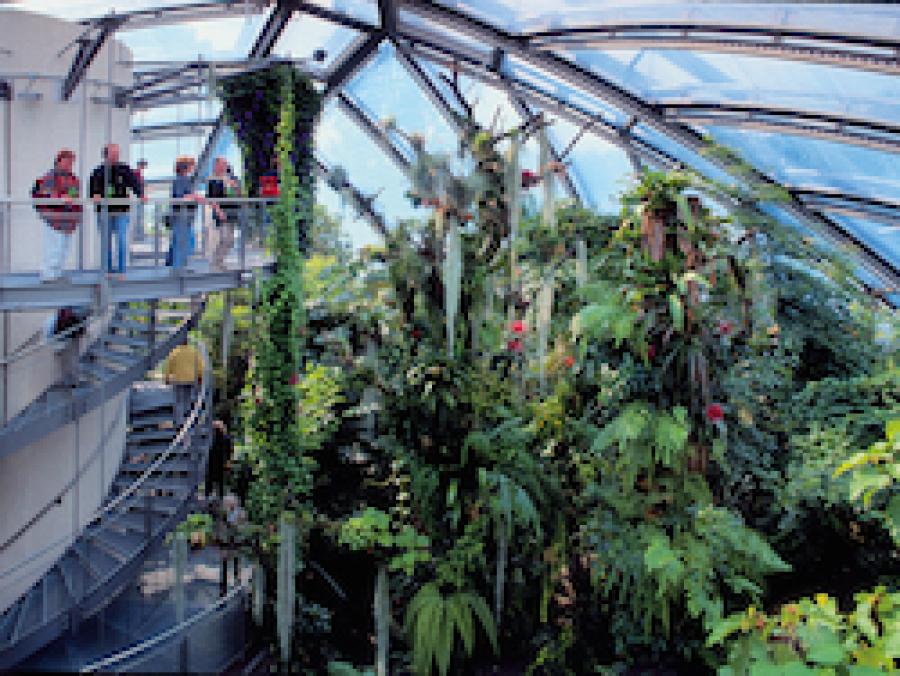 Regenwaldhaus Sonderausstellung Leisureworkgroup